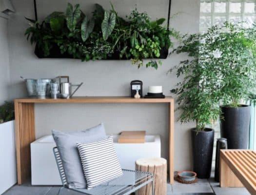 Cách trang trí phòng trọ bằng cây xanh