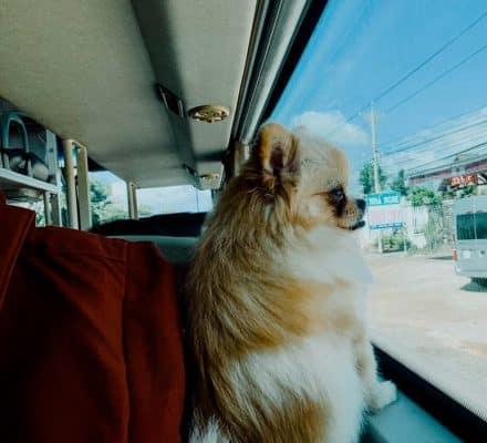 Chở thú cúng bằng xe khách