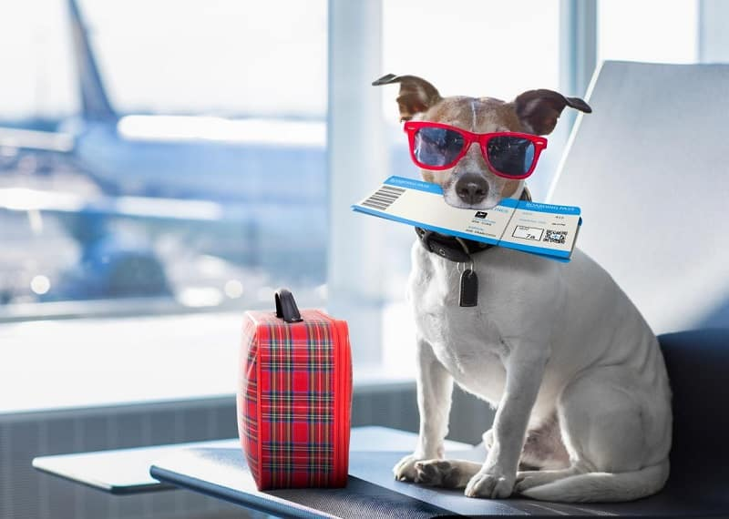 Vận chuyển thú cưng bằng đường máy bay
