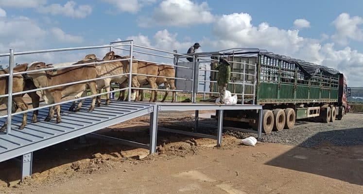 vận chuyển gia súc đi khỏi địa bàn cấp huyện trong phạm vi tỉnh