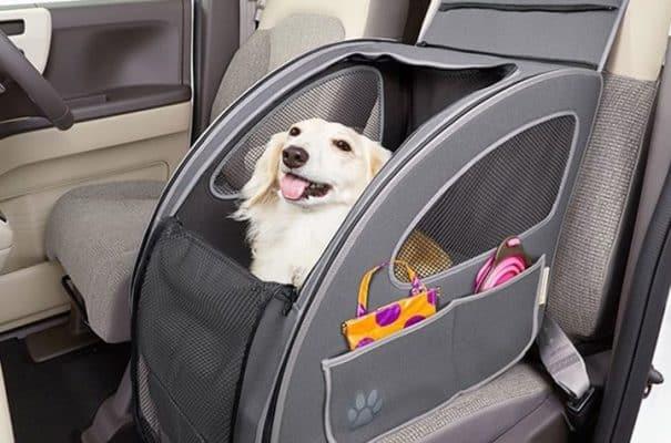 Cách làm chó mèo thoải mái khi vận chuyển bằng xe khách