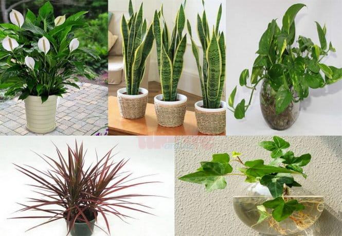Top 10 Trồng cây phong thủy trong nhà theo tuổi rước vượng khí